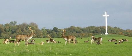 800px Deer by papal cross 460x197 Phoenix Park, con ciervos en libertad
