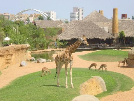 Bioparc 460x345 Bioparc, un zoológico diferente… y controvertido