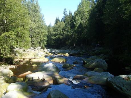 Bosque bávaro 460x345 El bosque más grande de Europa