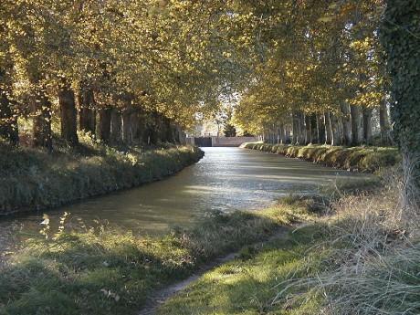 Canal du Midi 460x345 Los árboles del Canal du Midi se mueren