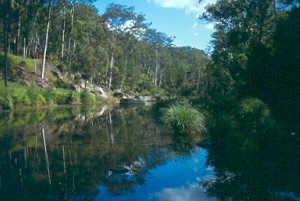 Carnarvon Gorge El Parque Nacional Carnarvon: un mundo perdido en Australia