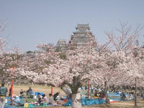 Hanami 460x345 Hanami, una preciosa tradición japonesa