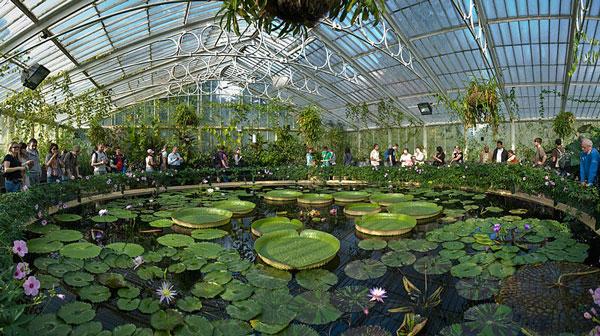 Kew Gardens Waterlily House Visitaste estos cinco jardines europeos ?