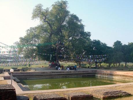 Lumbini 460x345 Lumbini, la ciudad donde nació Buda