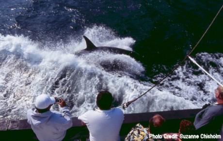 Luna 460x292 Luna, la historia conmovedora de una orca solitaria
