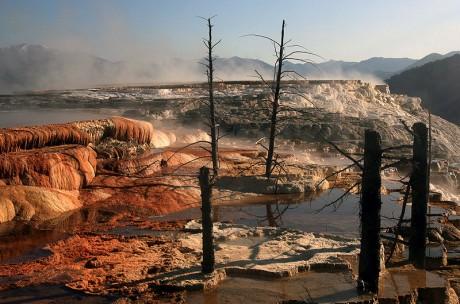 Mammoth Hot Springs 460x304 El corazón ardiente de Yellowstone