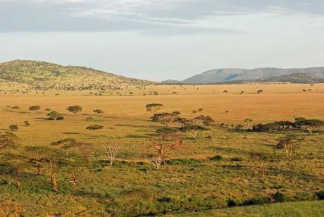 Serengeti 460x308 El Gran Valle del Rift, una maravilla natural única