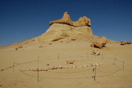 Wadi Al Hitan Wadi Al Hitan, el valle de las ballenas prehistóricas