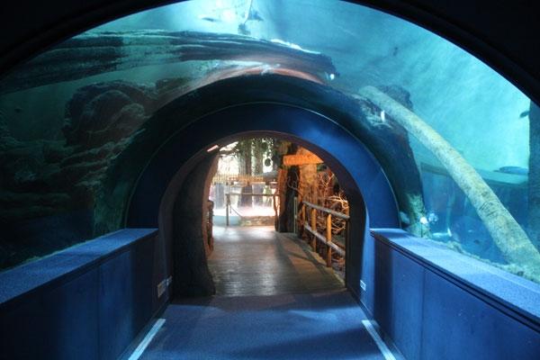 acuario de zaragoza Conoces el acuario de Zaragoza ?