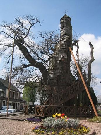 arbol1 345x460 El árbol capilla de Allouville Bellefosse