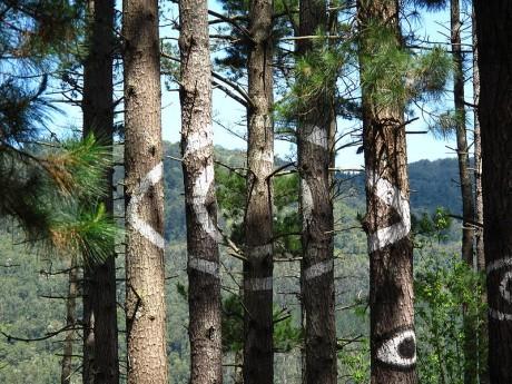 bosque 460x345 Arte en los árboles en el Bosque de Oma