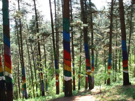 bosque1 460x345 Arte en los árboles en el Bosque de Oma