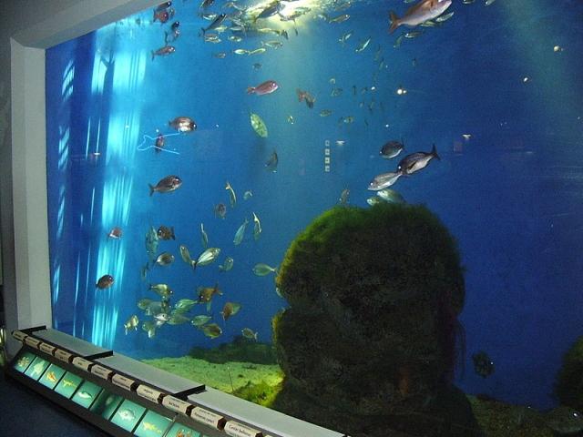 casa de los peces La casa de los peces