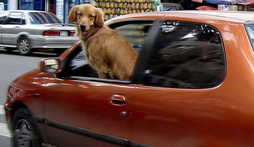 consejos viajar coche mascotas Consejos para viajar en coche con mascotas