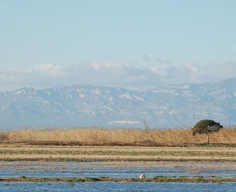 delta 460x374 El Delta del Ebro, zona natural insólita en Cataluña