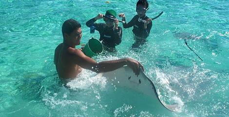 excursion ver rayas mar Destinos de buceo ¿Te gusta bucear o hacer snorkeling?