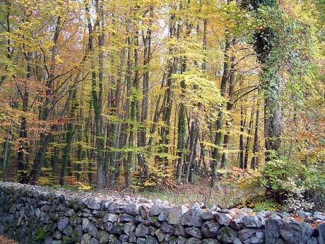 fageda 460x345 La Fageda den Jordà, un bosque mágico