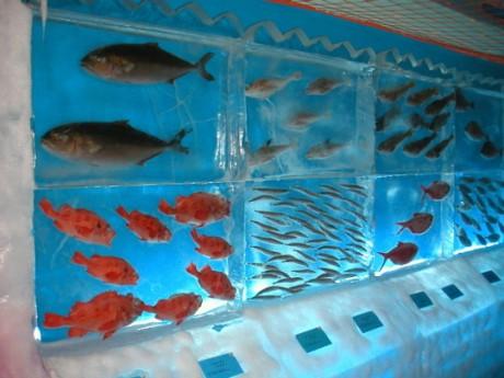 frozen 540x405 460x345 Un acuario congelado en Japón