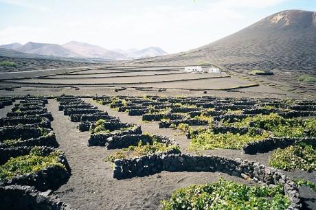 geria1 460x306 Recorre las rutas del vino de Lanzarote