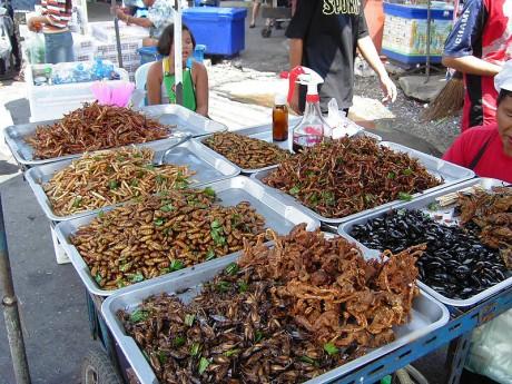 insectos 460x345 Los insectos...un rico alimento