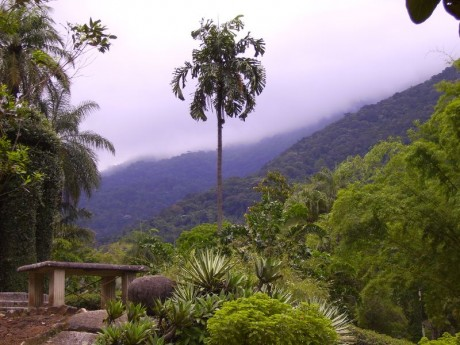 jardinbotanico 460x345 ¡Descubre el Jardín Botánico de Río de Janeiro!