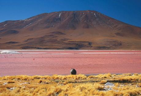 laguna colorada 460x315 La Laguna Colorada, otro milagro del planeta
