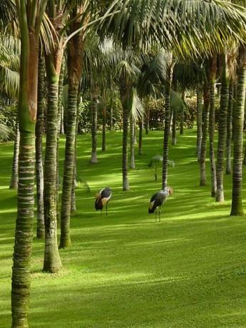 Palmeral, Loro Parque, Tenerife - Free Tickets Loro Parque