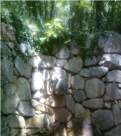 montseny2 409x460 Naturaleza mágica en el Montseny