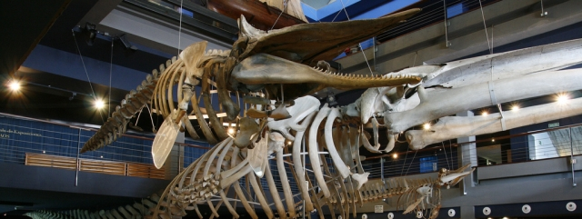 museo maritimo cantabria El mundo marino en el Museo Marítimo del Cantábrico
