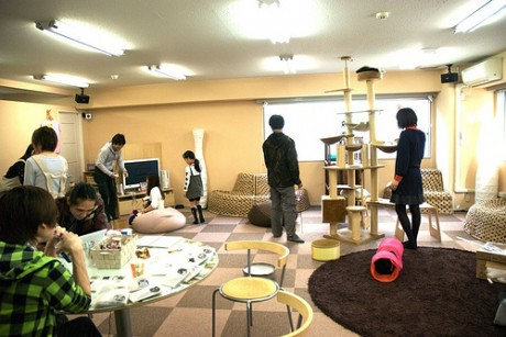nek 460x307 Neko Cafés, cafeterías de gatos en Japón