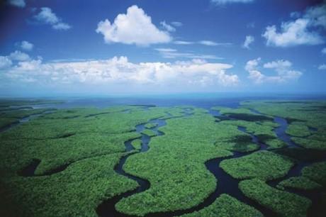 parque everglades 460x306 El Parque Nacional de los Everglades