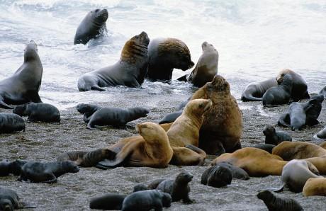 peninsulavaldés 460x298 La Península Valdés, el mejor lugar para avistar ballenas
