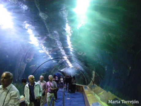 tunel 460x345 Un recorrido animal en el Oceanogràfic