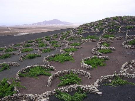 vino 460x344 Lanzarote, sol volcanes y vino